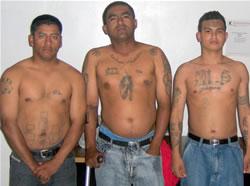 3 Men Los Gangas